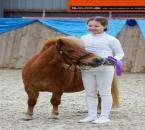 hingsteshow-357a