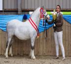 hingsteshow-549a-(3)